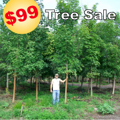 Landscape Source Tree Sale